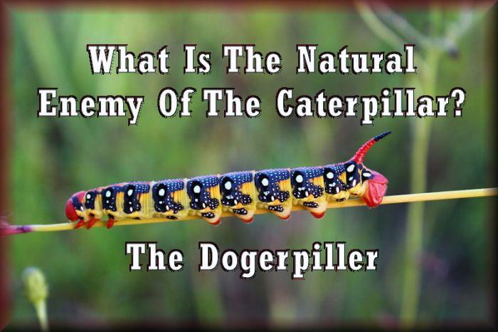 caterpillarenemies