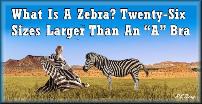 zebrasize