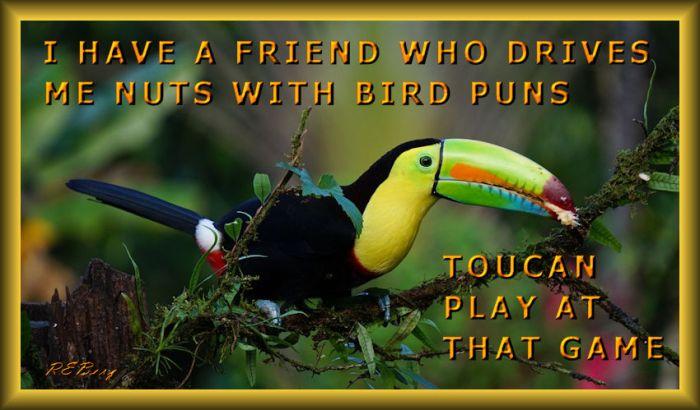 birdpuns