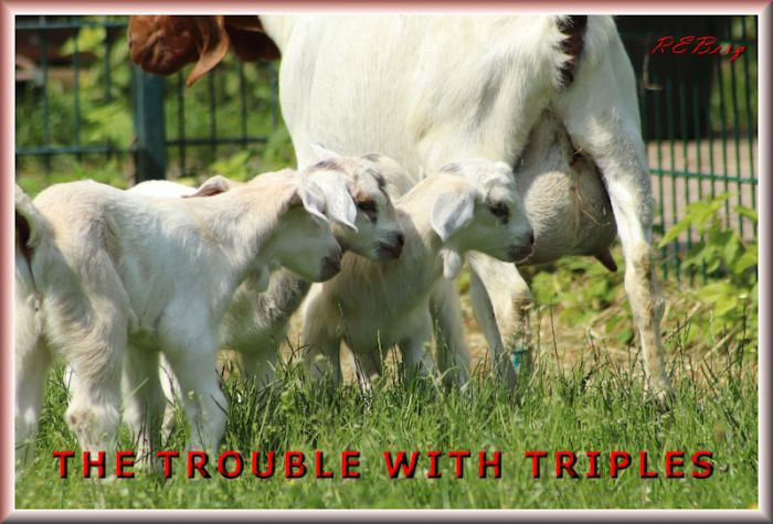 tribbletrouble