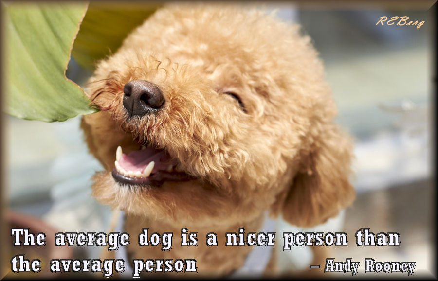 nicer-than-people