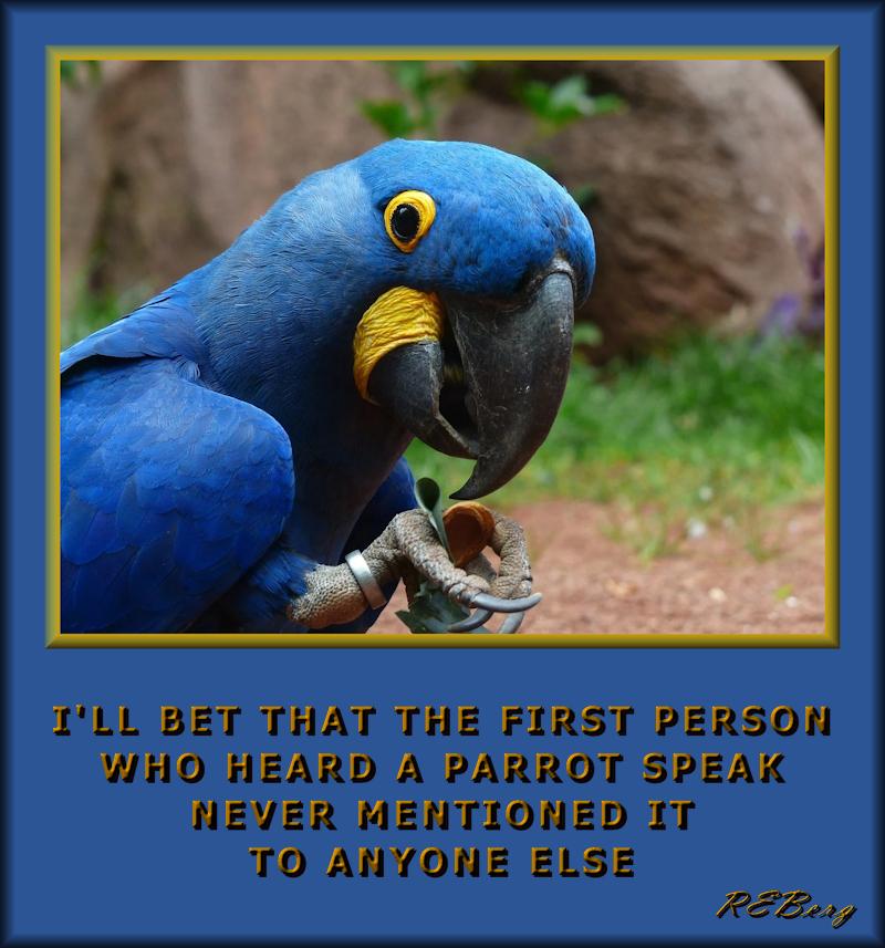 ornithological-hallucination